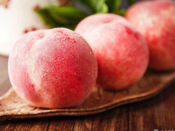 生来就是独一无二的存在 水蜜桃和毛桃区别在哪